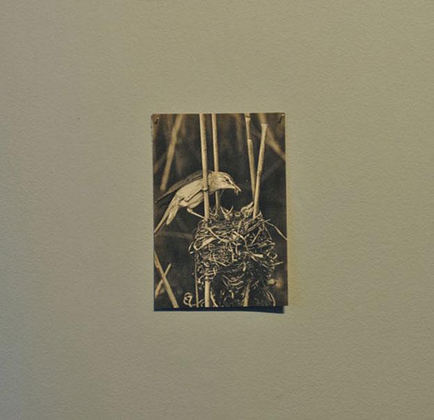 ff_archive-bird