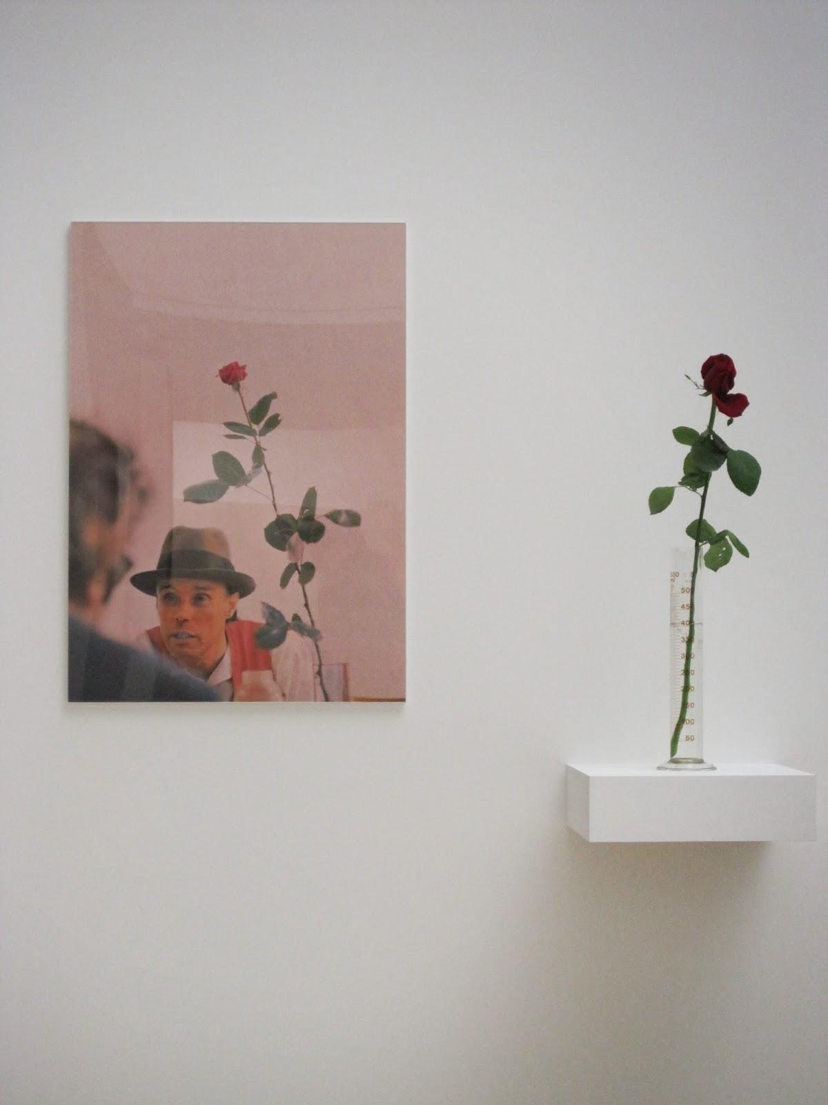beuys+rose+1.5
